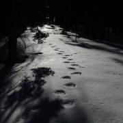 Bear tracks near Horizon Ridge