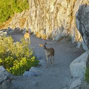 Two deer sharing the start of the trail