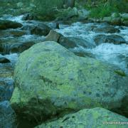 rock in river