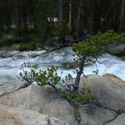 tree by rushing river
